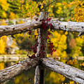 Fall Fences At Mohonk Mountain by Alissa Beth Photography