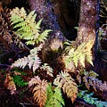 Fall Ferns by Lori Mahaffey