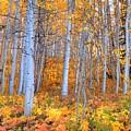 Fall Fiesta by David Ross