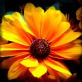 Fall Flower 2.0 by Jennifer Kohler