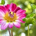 Fall Flower Garden by Christine Belt