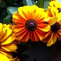 Fall Flowers by Jennifer Kohler