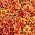 Fall Flowers by Karin Pinkham