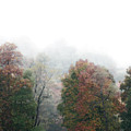 Fall Fog by Tracy Winter