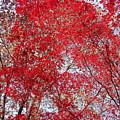 Fall Foilage by Deborah  Crew-Johnson