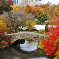 Fall Foliage In Central Park by Nishanth Gopinathan