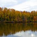 Fall Foliage by Brian Schultz
