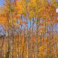 Fall Foliage Color Vertical Image by James BO Insogna