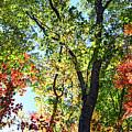 Fall Foliage by Dia Karanouh
