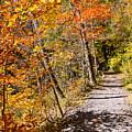 Fall Foliage by George Fredericks
