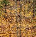 Fall Foliage by Guillermo Escudero