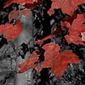 Fall Foliage In Pennsylvania by Bob Hahn