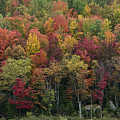 Fall Foliage In The Adirondack Mountains - New York by Brendan Reals