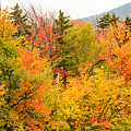 Fall Foliage In The Mountains by Terri Morris