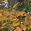 Fall Foliage by JAMART Photography