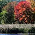 Fall Foliage Marsh by Smilin Eyes  Treasures