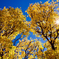 Fall Foliage Near Ruidoso Nm by Matt Suess
