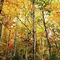 Fall Foliage On The Hike Up Mount Monadnock New Hampshire by Maili Page