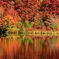 Fall Foliage by Ronda Ryan