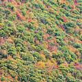 Fall Foliage by Zawhaus Photography