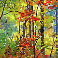 Fall Forest 2 by David Boudreau