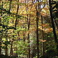 Fall Forest 2 by William Selander