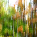 Fall Forest Colors by Dia Karanouh