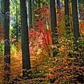 Fall Forest Splendor by Lynn Bauer