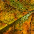 Fall Fusion by Bonnie Marquette