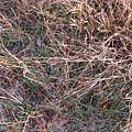Fall Grasses by Richard Singleton