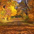 Fall by Gwen Allen