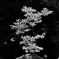 Fall Illumination In B/w by William Selander
