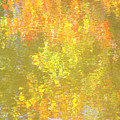 Fall Impressions by Sybil Staples