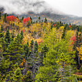 Fall In Baxter State Park Maine by Brendan Reals