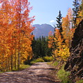 Fall In Colorado by Carol Milisen