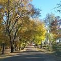 Fall In East Texas by Brandon Fleet