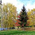 Fall In Kaloya Park 1 by Will Borden