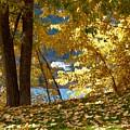 Fall In Kaloya Park 3 by Will Borden