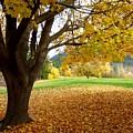 Fall In Kaloya Park 8 by Will Borden