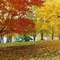 Fall In Kaloya Park 9 by Will Borden