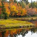 Maine Fall by Glenn Gordon