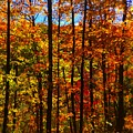 Fall In Ontario Canada by Barbara Griffin