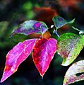Fall In Shades Of Purple by Kenna Westerman
