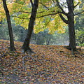 Fall In Stony Brook by Raju Alagawadi
