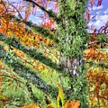 Fall In The Florida Panhandle by JC Findley