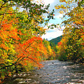 Fall In The Smokey Mountains  by Brittany Horton