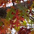Fall In Virginia by Brian Jordan