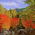 Fall In Whistler by Lynn Bauer