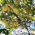 Fall In Woods by Jeelan Clark