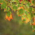 Fall-ing Rain Square by Terry DeLuco